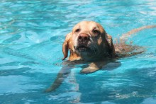 marley-swimming